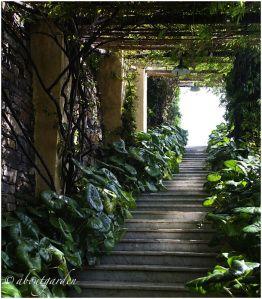 Un giardino salvato dai rovi, dal degrado e soprattutto dalla speculazione edilizia. Dopo solo circa 4 anni dall'acquisto, con gli odierni ed illuminati proprietari che si sono rivolti e lasc…