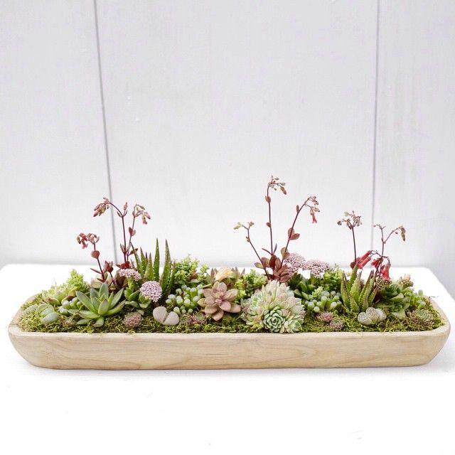 Low succulent dish garden for an outdoor centerpiece for Succulent dish garden designs
