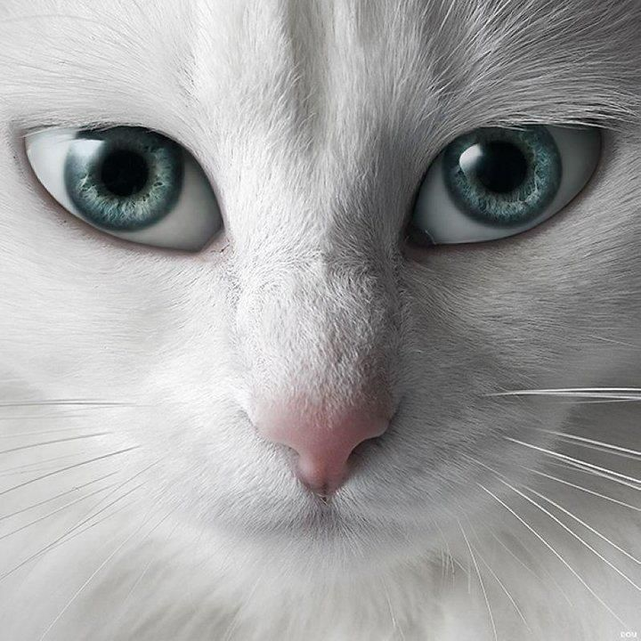 This cats eyes are freaking me out, they look like people eyes