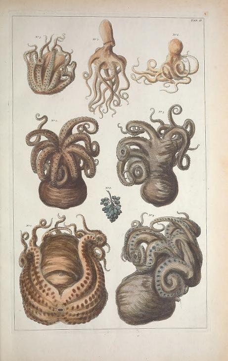 1734-65 - v.3 - Cabinet de Seba ... or Locupletissimi rerum naturalium thesauri accurata descriptio, et iconibus artificiosissimis expressio, per universam physices... by albertus seba