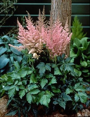 Deer resistant plants perennials and the shade on pinterest for Low maintenance perennials for shade