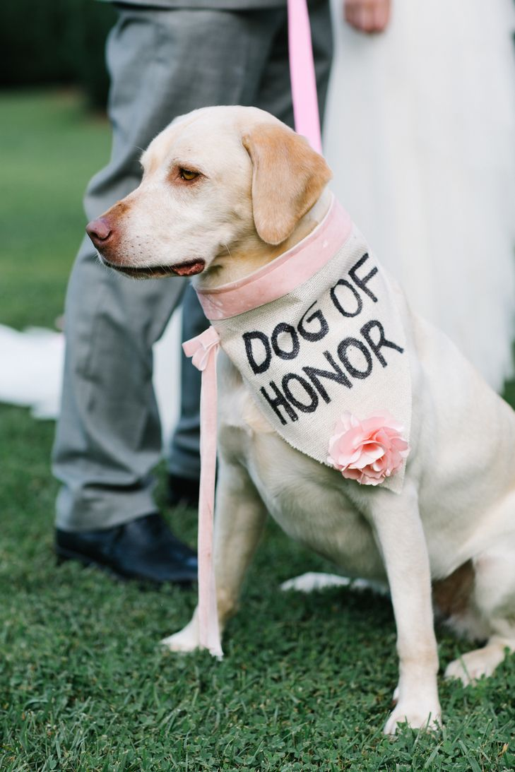 """Our dog Aspen is a wild woman. She is definitely our best pal and we take her with us almost everywhere,"" Kate says. ""When we decided to make her the flower girl, ring bearer, dog of honor (we drew the line at officiant), we fully expected her to do something crazy or just bark for the entire ceremony. We were absolutely shocked when she laid down for the whole ceremony. She was so comfortable that we had to drag her away when we turned to walk out. I made her dog of honor collar with the…"