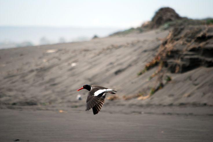 Name: Pilpilen / Punta de Lobos · Pichilemu · Chile / Photo renzobraccesi©