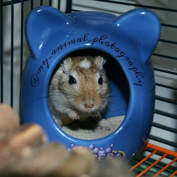 how to train your gerbil