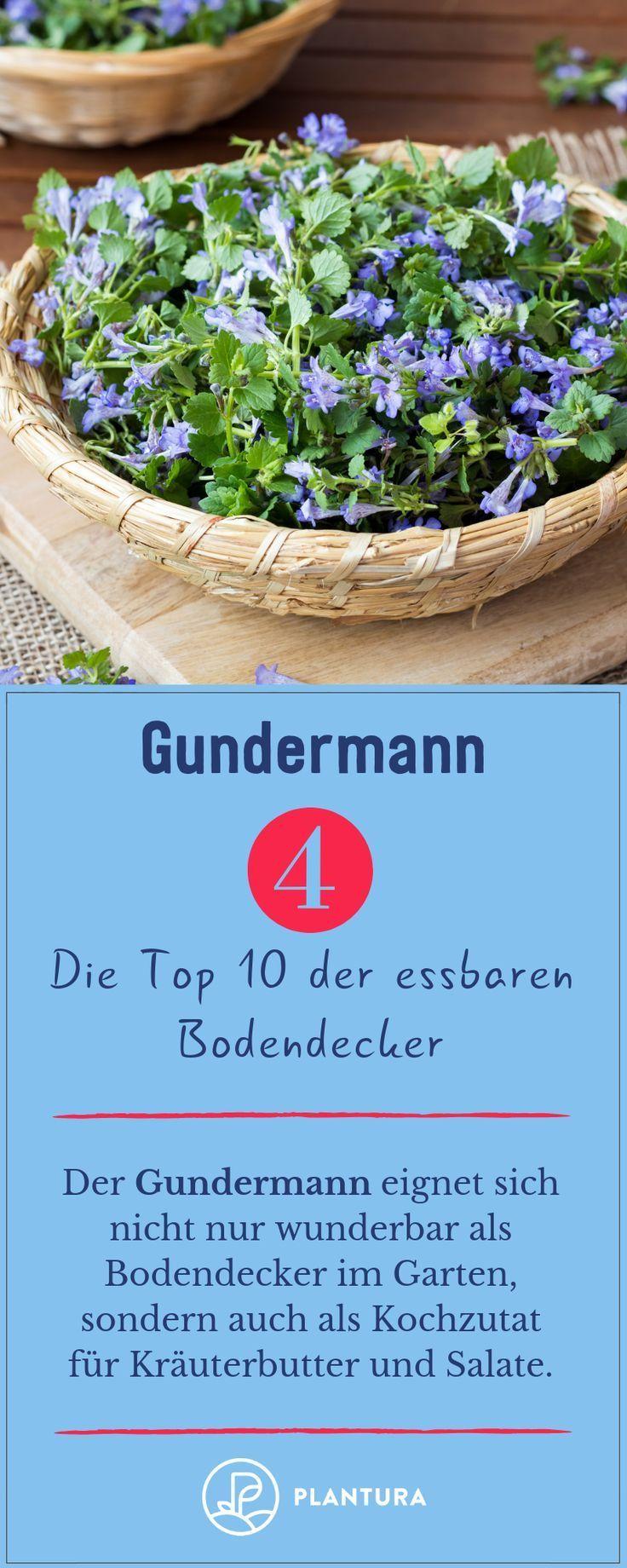 Edible Ground Cover The Top 10 For Your Garden Gartenkuche Rezepte Kuchentipps Container Gardening Vegetables Ground Cover Edible Garden