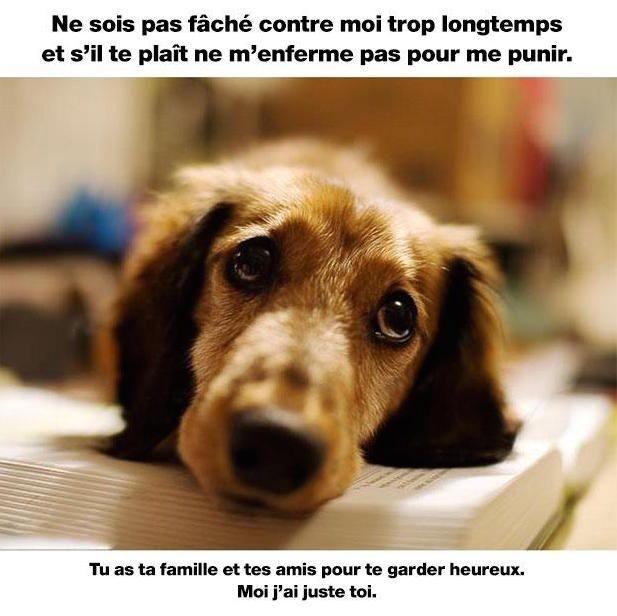 chien-ami-heureux