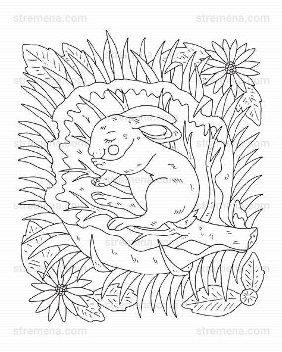 Cute Little Woodland Animals Printable Coloring Pages Pdf Etsy Animal Coloring Pages Cute Coloring Pages Elephant Coloring Page