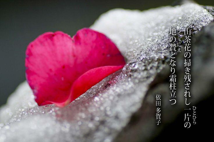 短歌 依田多賀子 山茶花の 掃き残されし 一片の…