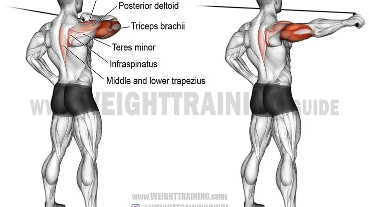 52 best back exercises images on pinterest
