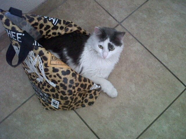 Shopping bags are a favourite!