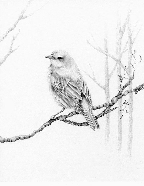 Drawing Artwork Winter Woodland Bird Pencil Drawing Bird Art Print