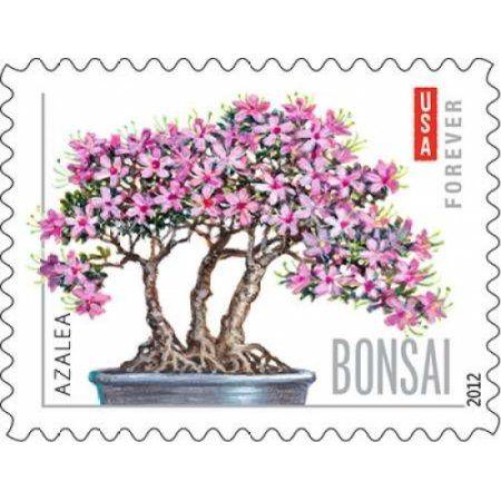 Bonsai Azalea Canvas Art - US Postal Service (22 x 28)