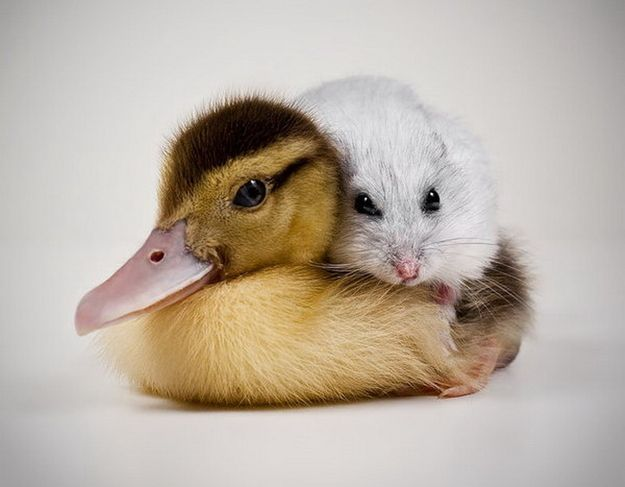 <b>We all like cuddly animals, so it's probably for the best that someone is keeping track of these things.</b>