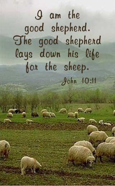 I am the good shepherd. The good shepherd lays down his life for the sheep. ~John 10:11