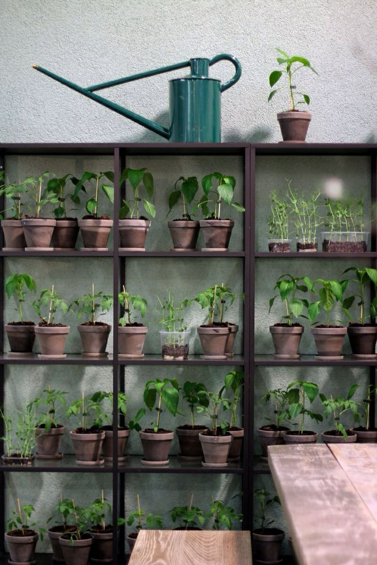 4477 best retail garden centre design display images on for Plant shelf plans