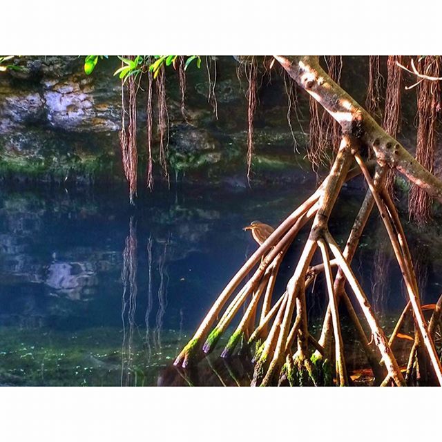 Los colores de la vida. #mexico_tour #mexico_great_shots #mexico_fotos #mexico #mexicolors #naturelovers #blue #picoftheday #beautifulplace #beautifulplanett #igermexico #cenote #playadelcarmen #igersplayadelcarmen #quintanaroo #travelgram #travel #wanderlust #birth #mx #morning by yarthkyn_ch. beautifulplace #morning #travelgram #quintanaroo #mexicolors #wanderlust #igermexico #beautifulplanett #mexico #playadelcarmen #naturelovers #cenote #picoftheday #mexico_great_shots #blue…