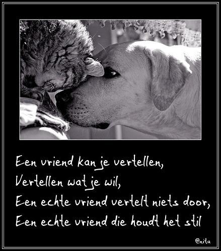 SPREUKEN EN WIJZE GEZEGDEN. , Spreuken op dieren plaatjes. - Hyves.nl