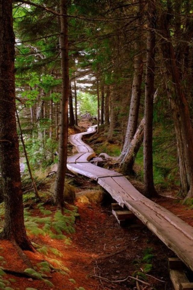 Forest path 47 best Hikes in Bend