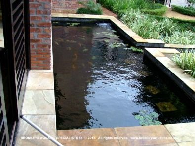 Diy koi pond construction koi ponds water features for Koi for sale san diego