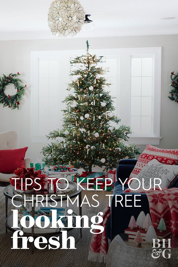 Here S How To Keep Your Christmas Tree Looking Good All December Long Christmas Tree Care Christmas Tree Live Christmas Trees