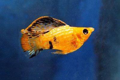 17 best images about aquarium fish on pinterest live for Petsmart fish guarantee