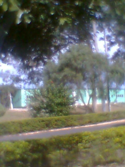 muitas arvores muito verde ar puro