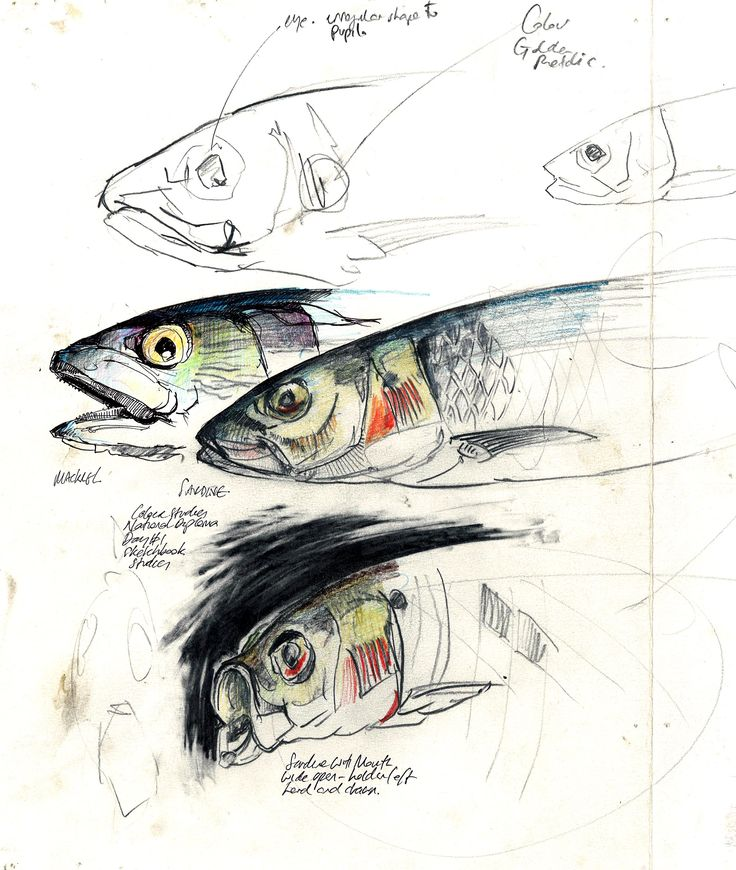 Duncan Cameron, Fish Studies - working with students at college. Originally pinned by the artist.
