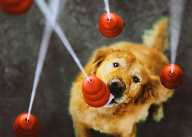 Yum! Over 10 Delicious Dog Recipes for Stuffing a KONG Toy: www.aspca.org/pet-care/virtual-pet-behaviorist/dog-behavior/how-stuff-kong-toy Image via @KONG Company