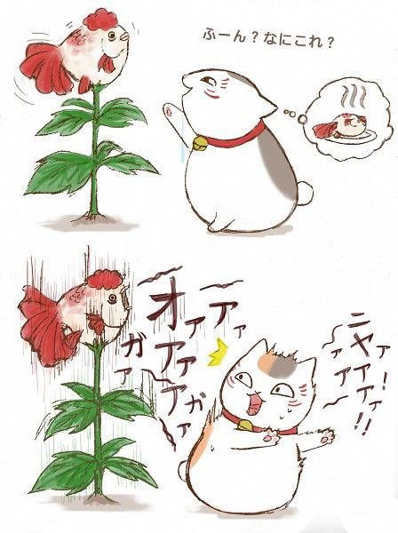 Natsume Yuujinchou / Hoozuki no Reitetsu ~~ Nyanko-sensei discovers the Hellspawn goldfish plant.