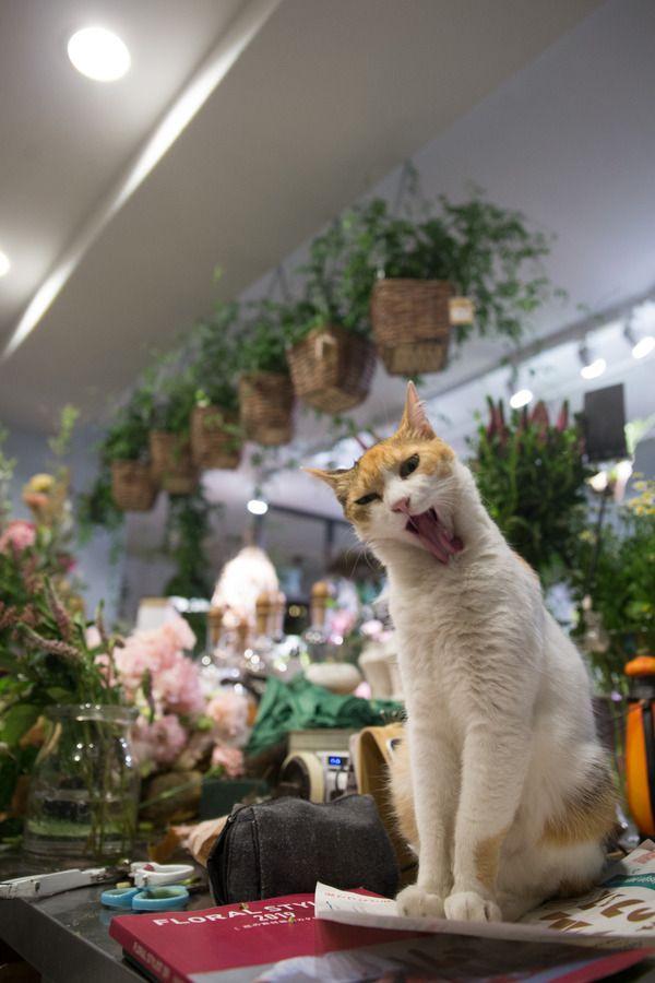 猫 ブログ ランキング