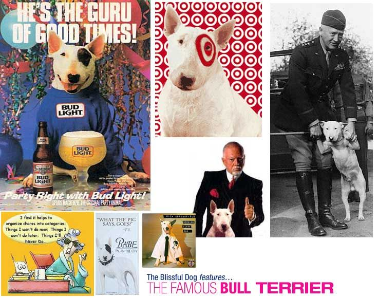Famous Bull Terriers! Spudz, Target Dog, Maxine's Bull Terrier, General Patton's Willie and more.