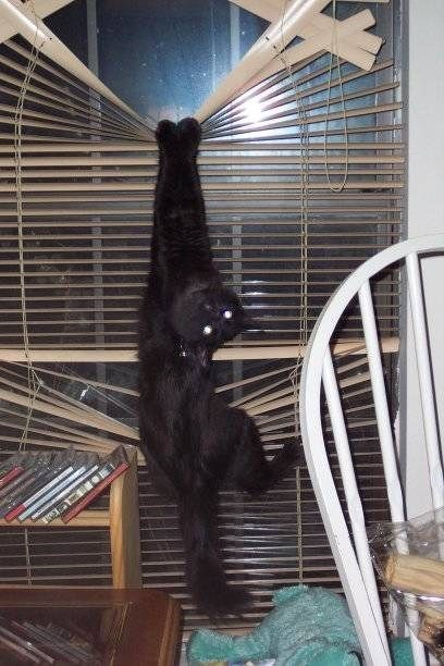 Cats vs. Blinds - When cats and blinds go at it, nobody wins.