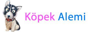 mavi g�zl� sibirya kurdu husky yavrusu Nil�fer - Sat%u0131l%u0131k K�pek Yavrular%u0131 %u0130lan Sitesi