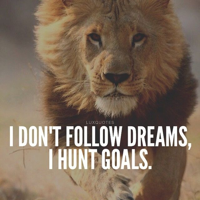 Motivational Quotes With Lion Images: 25+ Best Lion Quotes On Pinterest