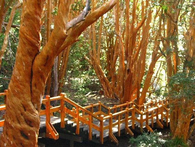 Bosque Los Arrayanes Bariloche. Argentina