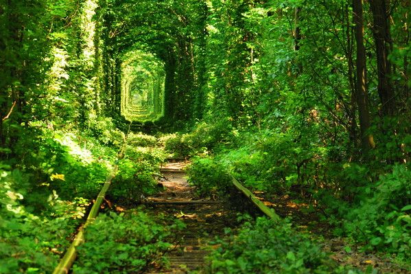 One of the most beautiful spots in the world, the Tunnel of love is a naturally formed tunnel in Klevan, Ukraine. The track that passes thro...