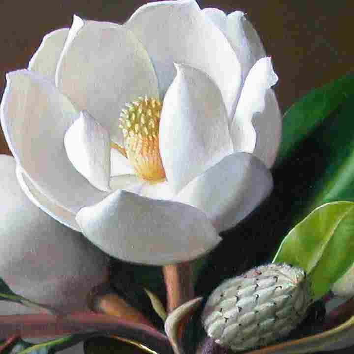 Magnolias.jpg (720×720)
