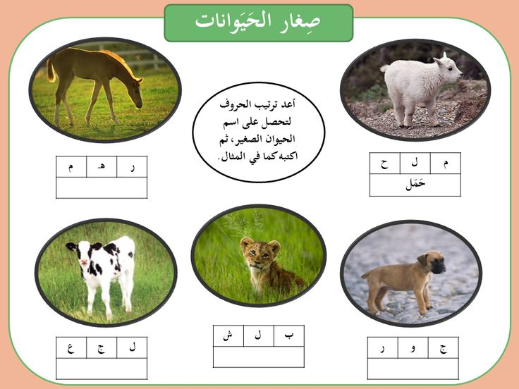 Baby Animals Lesson Plan for Elementary School | Study.com