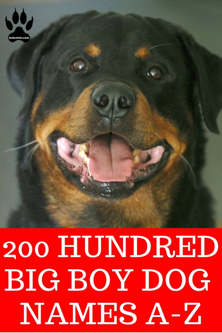 Pin On Store Dog Breeds That Dont Shed