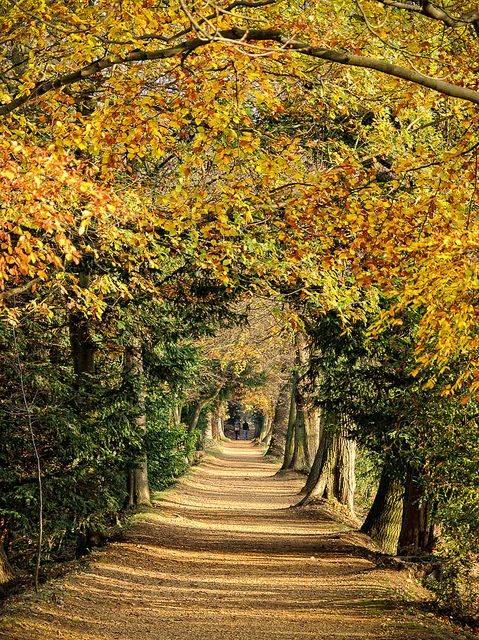 Addison's Walk, Magdalen College, Oxford by sdhaddow, via Flickr