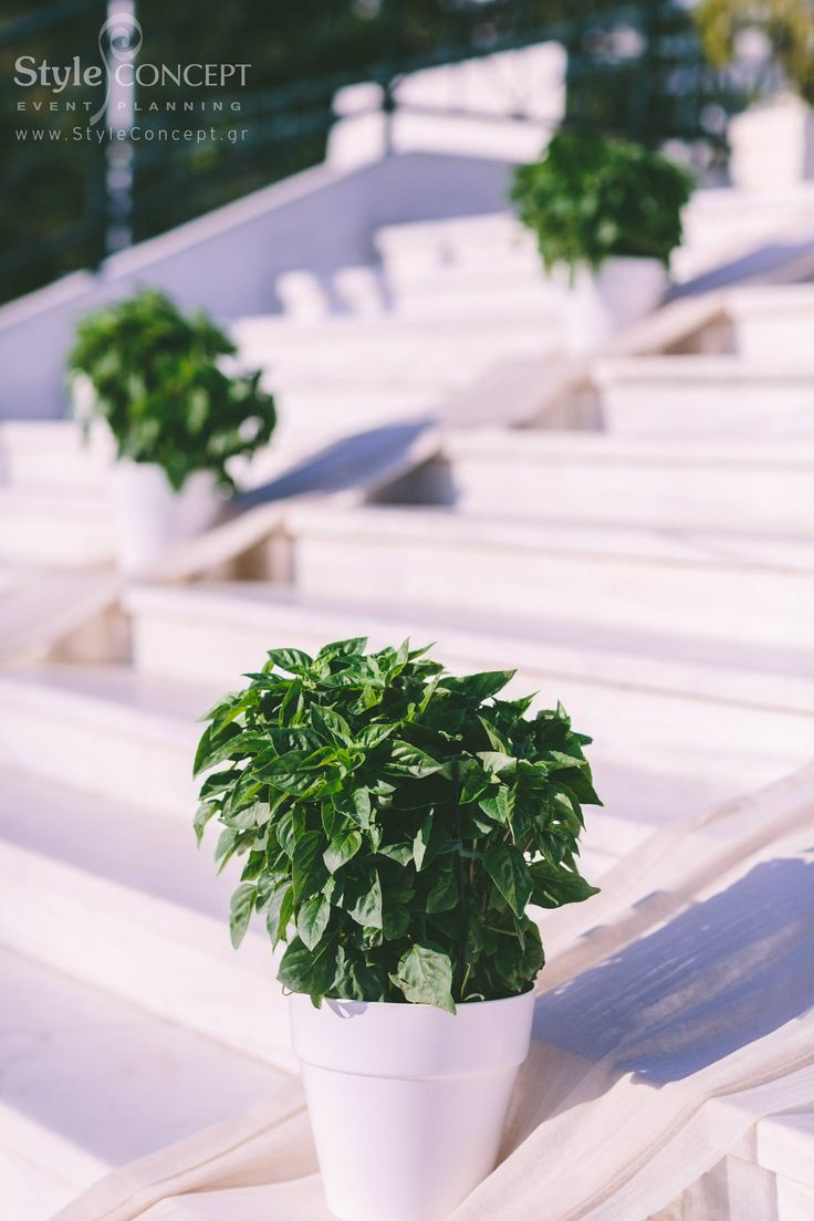 How nicely these basil plants decorate the church stairs! Imagine the light scent of the herbs as the bride walks up the stairs!