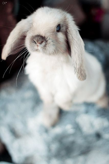 Awww! Rabbits are so adorable.