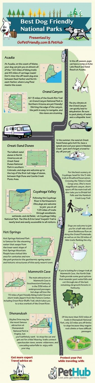 When on your next adventure, find a local national park that you and your pawfect travel companion can enjoy. #infographic