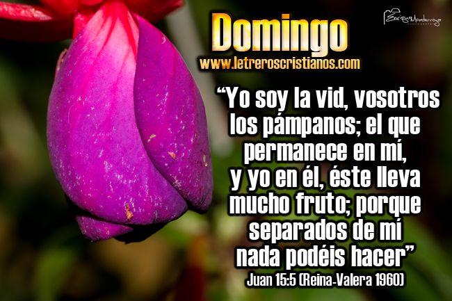 Domingo – Juan 15:5 « Letreros Cristianos.com :: Imagenes Cristianas, Imagenes para Facebook, Frases Cristianas