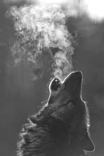 I've always connected to the wolf mother.                                                                                                                                                      More