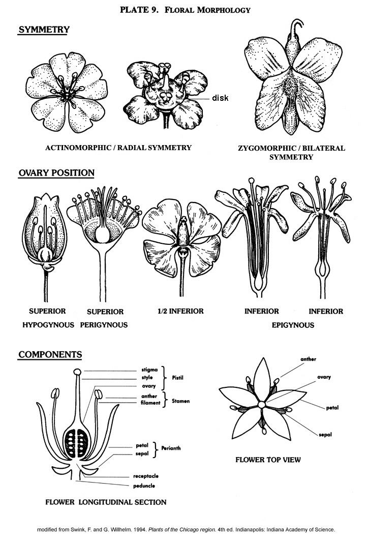 Plate 9 Floral Morphology Plant Science Botanical Science Botany Lessons