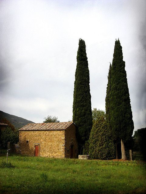 21 Best Trees And Plants Of Italy Images On Pinterest