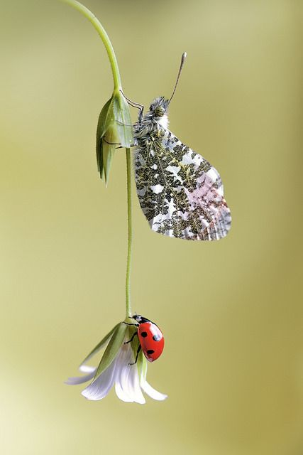 Duo - ladybug and butterfly on flower