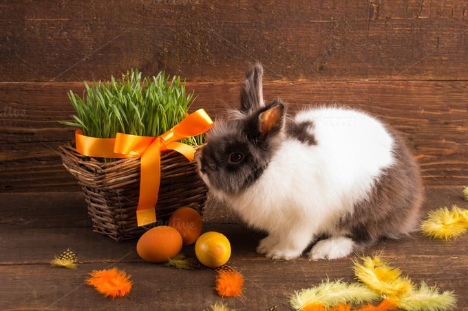 cute easter bunny by peterzsuzsa on Creative Market