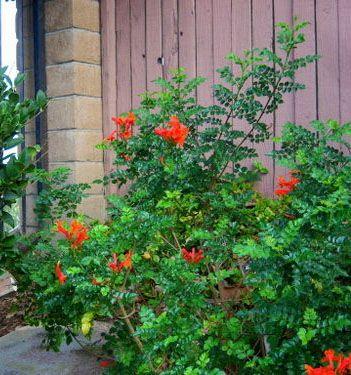 Best Garden Orange Flowers Images On Pinterest Orange